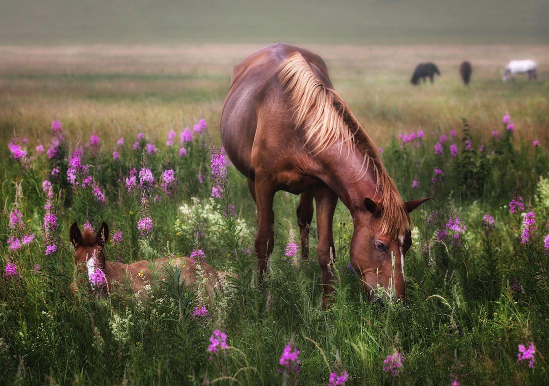 Лошадь в цветах  № 3117179 бесплатно