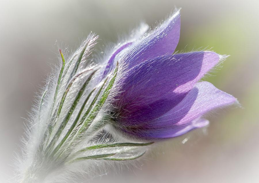 относится мерцающие картинки про март любим, красив