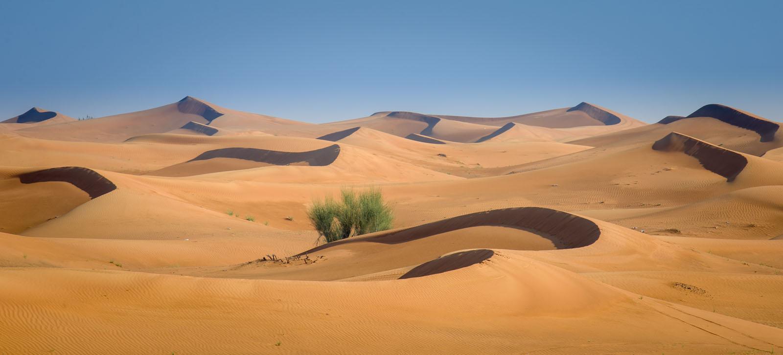 Картинки про пустыню для детей