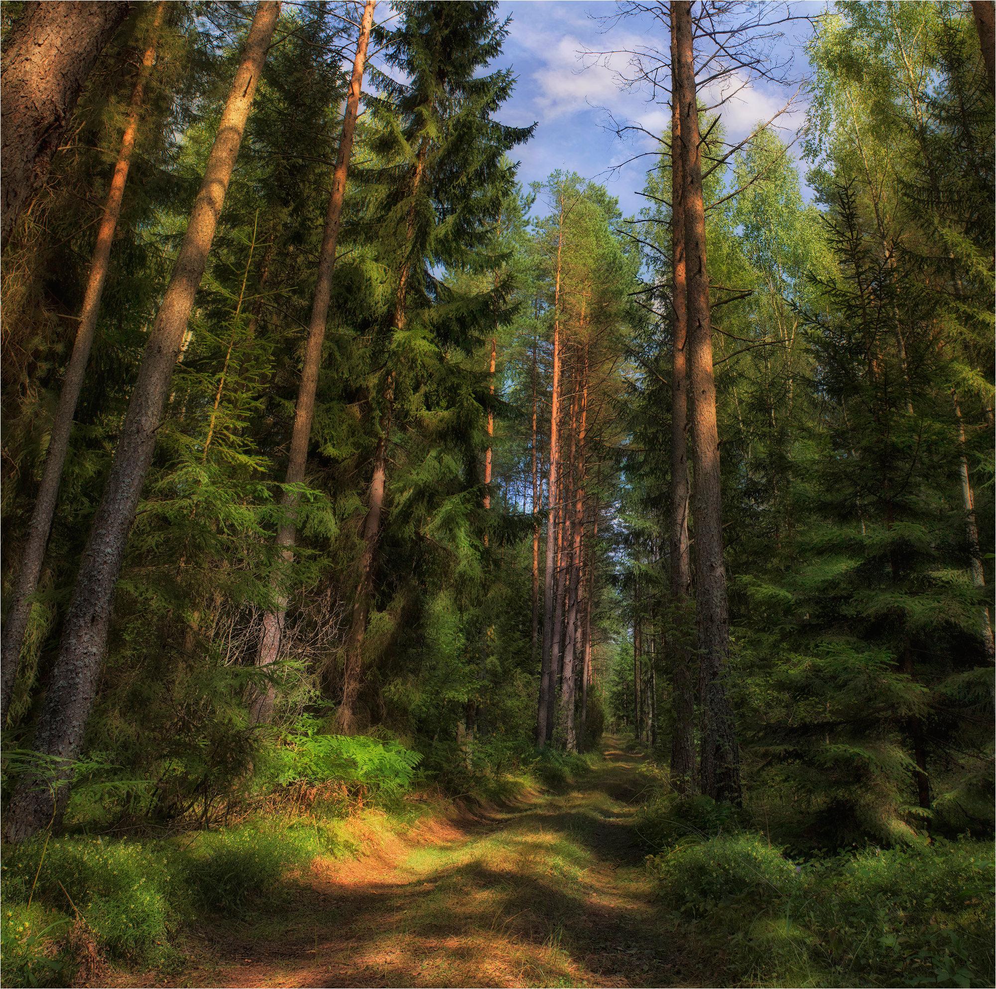 картинки лесные просторы прохладном месте более