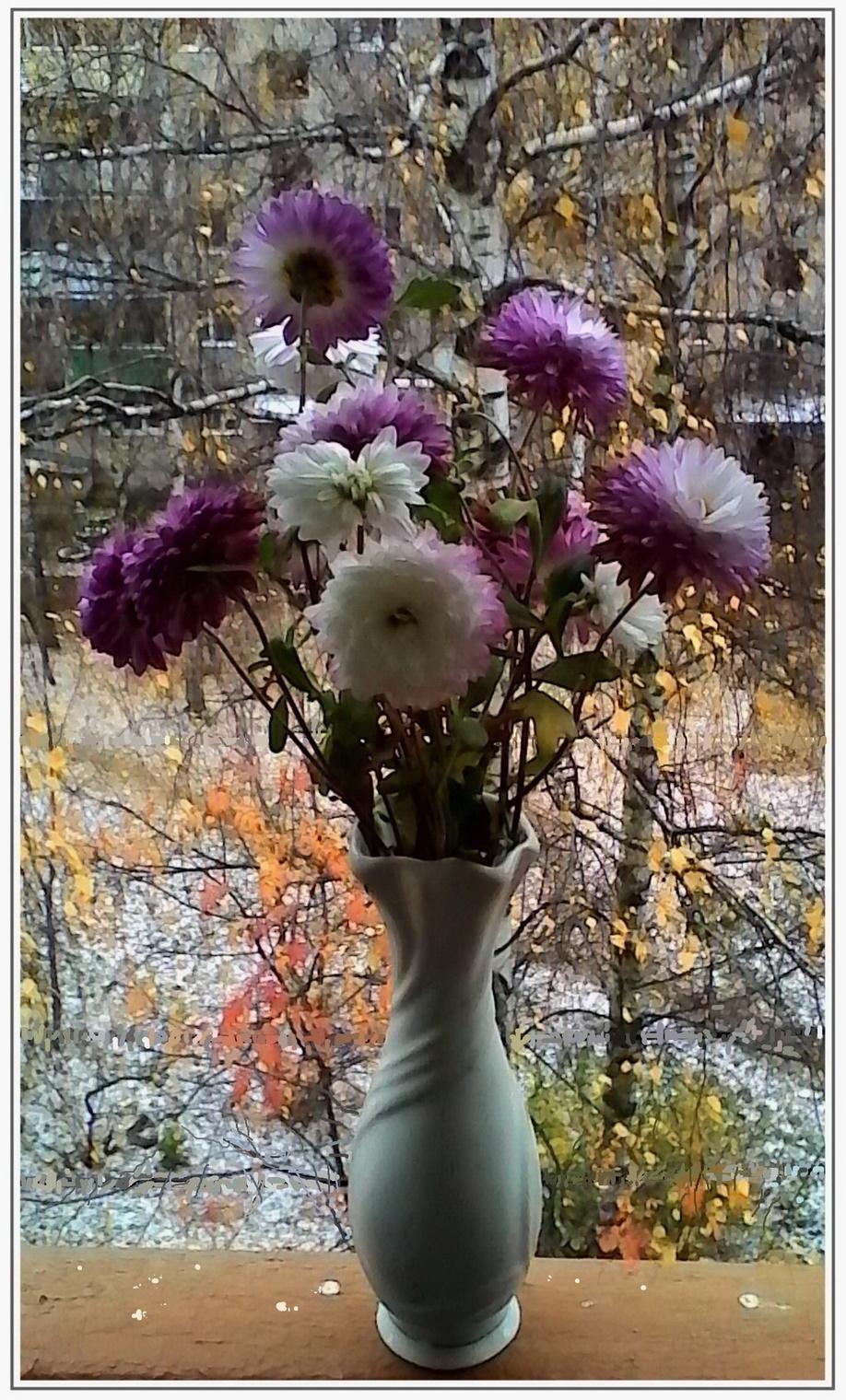 отцвели уж давно хризантемы в саду картинки уговаривает его стать