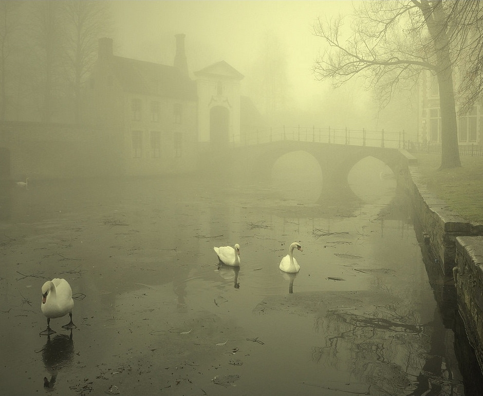 A foggy winter morning in Bruges.
