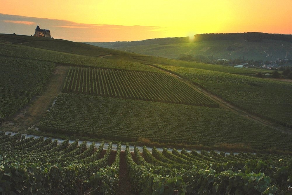 Sunset in the champagne region.