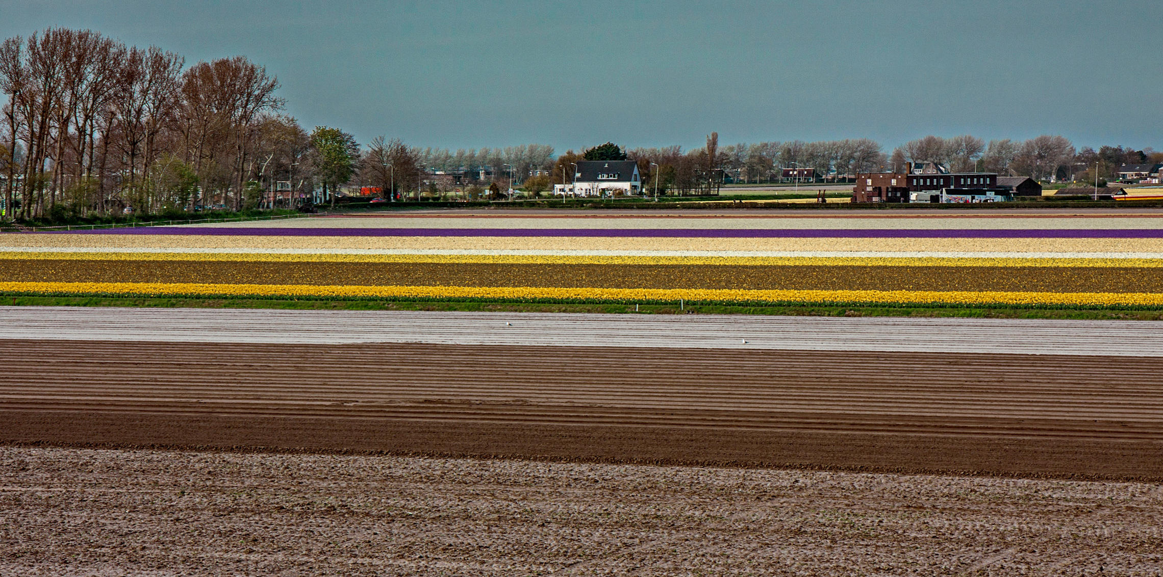 Tulips in Holland 04-2015(2)