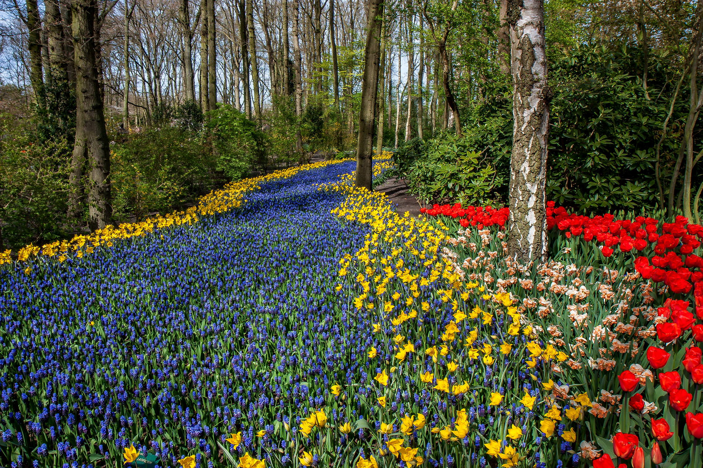 Tulips in Holland 04-2015 (5)