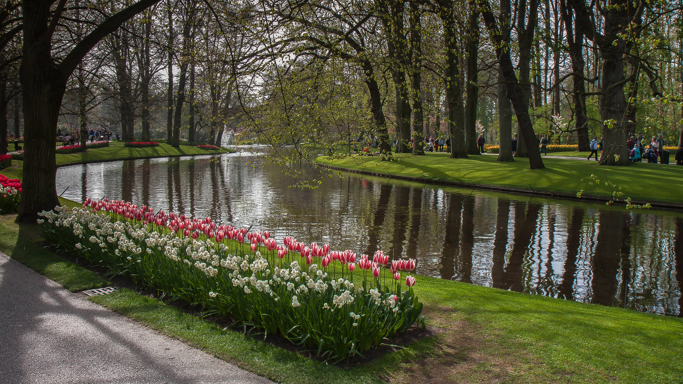 Tulips in Holland 04-2015 (6)