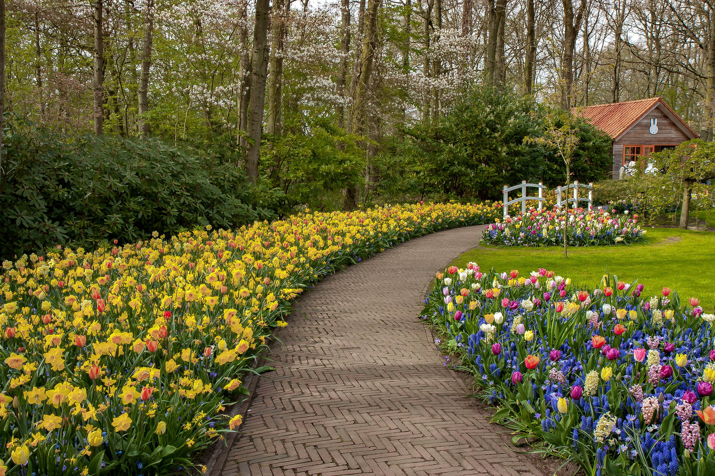 Tulips in Holland 04-2015 (7)