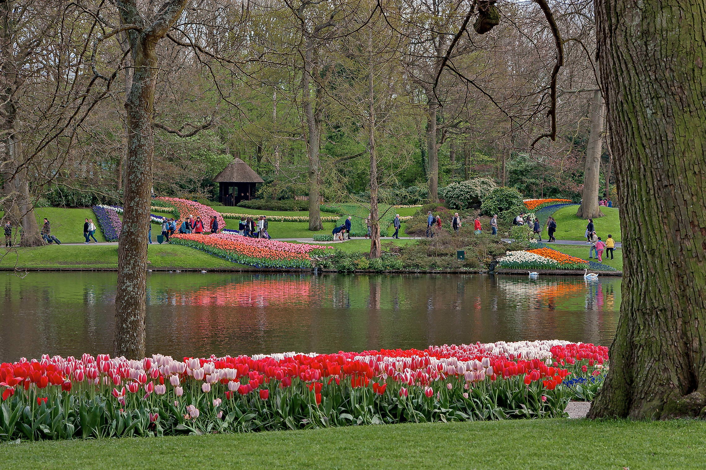 Tulips in Holland 04-2015 (10)