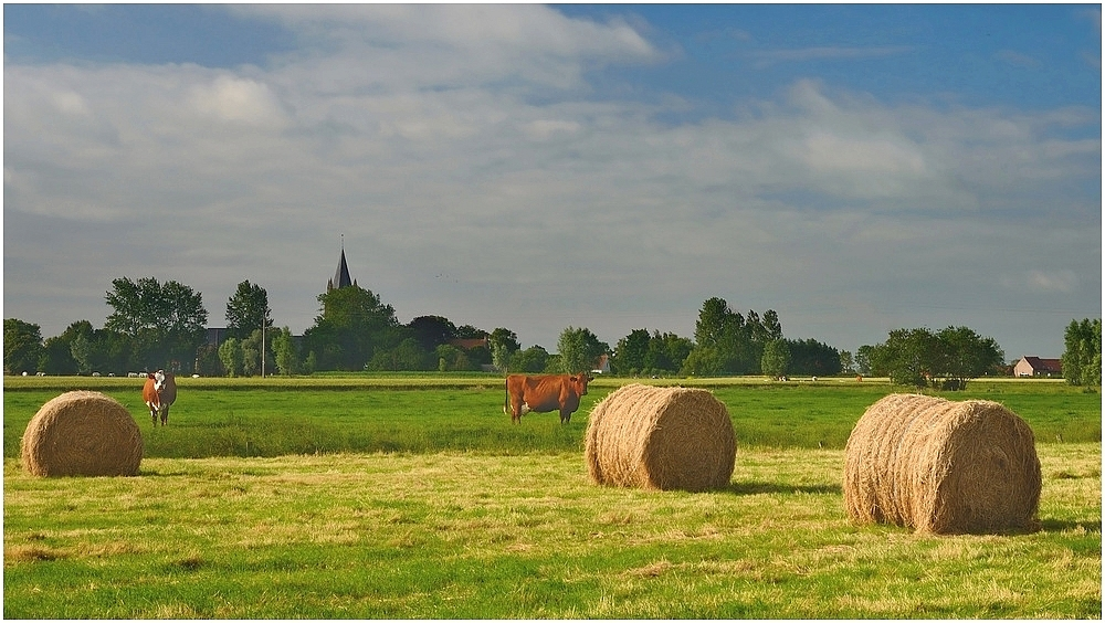 A summer day in Flanders