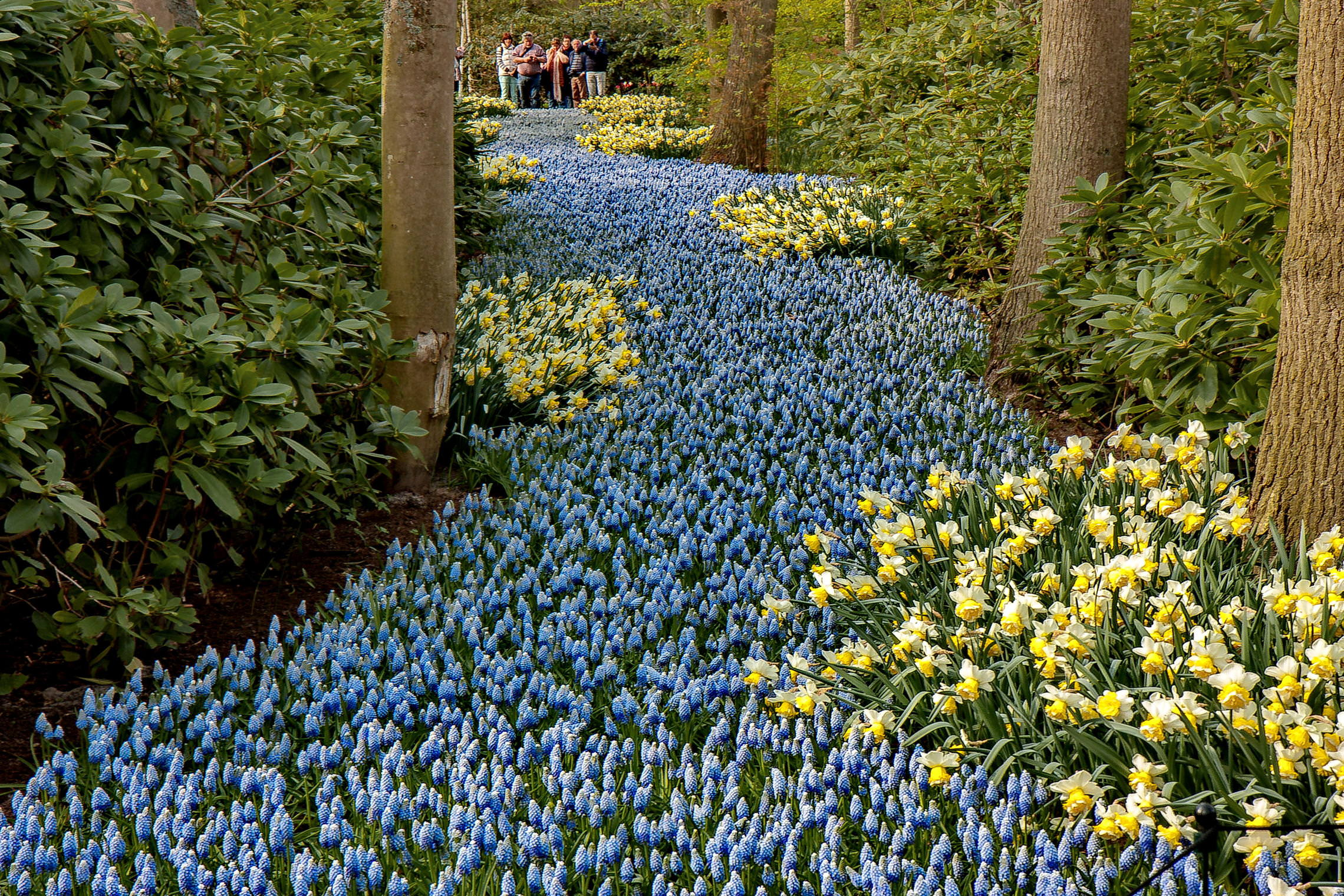 Tulips in Holland 04-2015 (14)