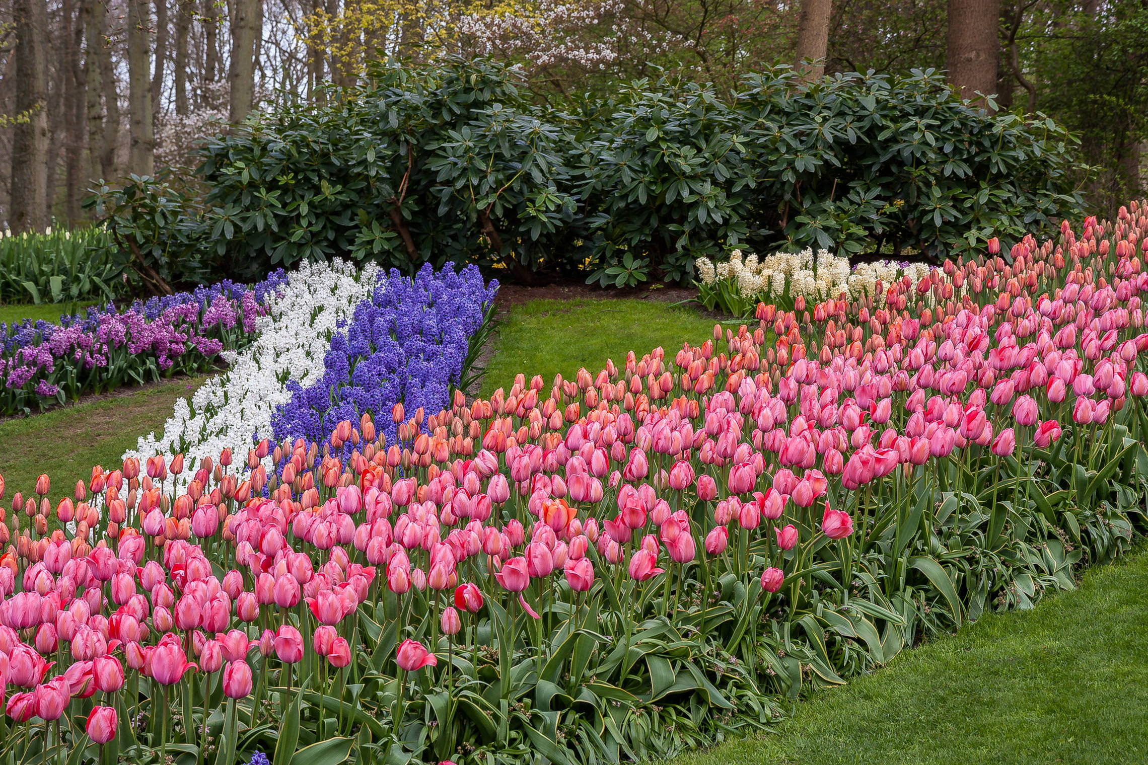 Tulips in Holland 04-2015 (16)