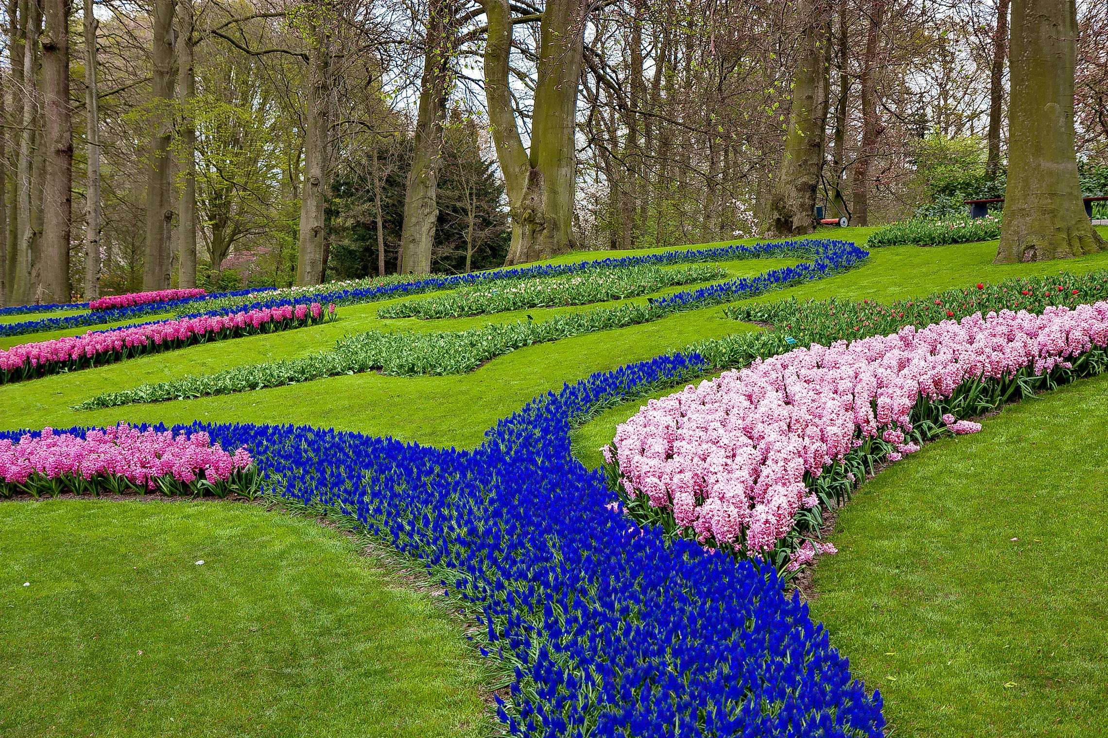 Tulips in Holland 04-2015 (19)