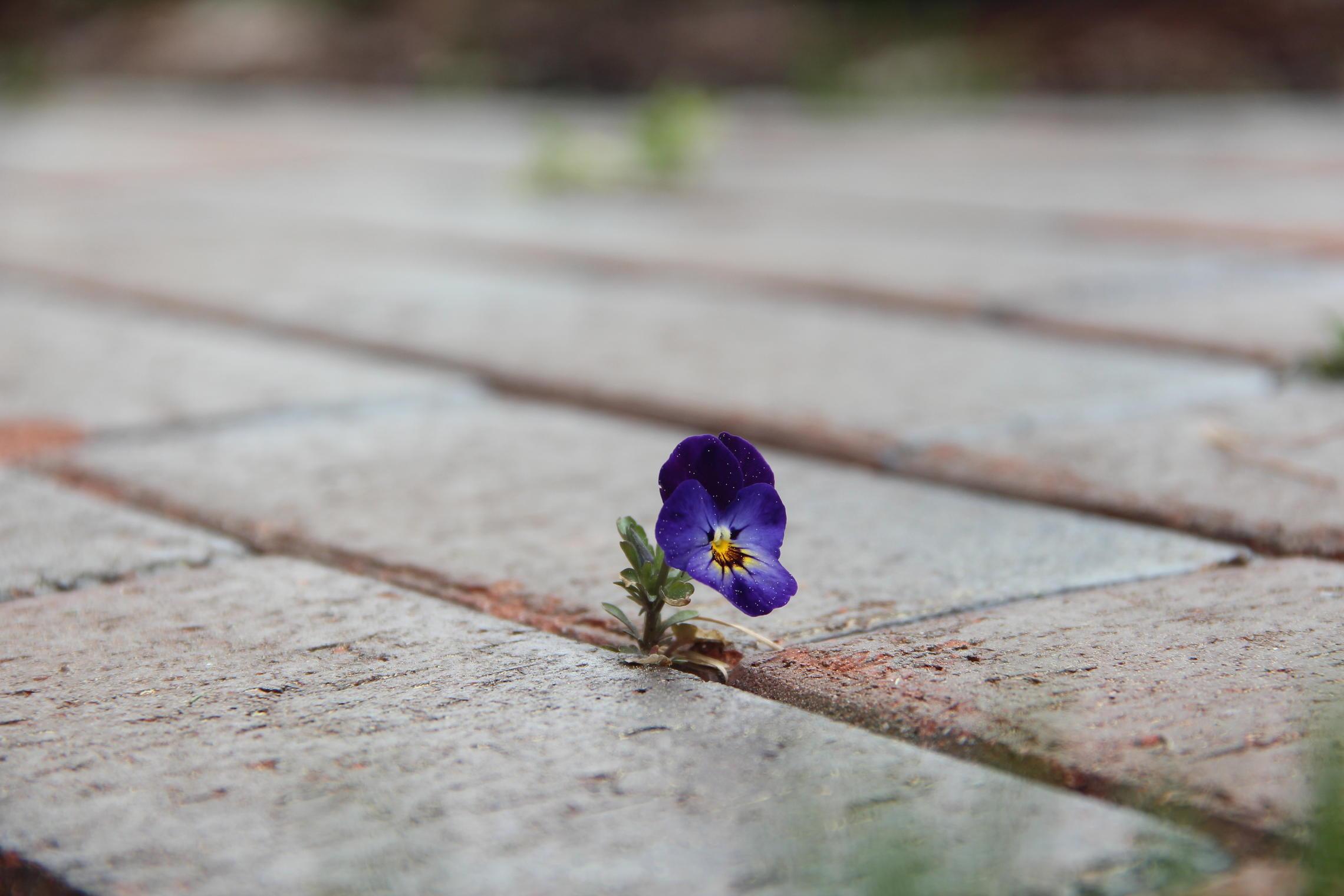 просто красивые картинки цветок из асфальта мод