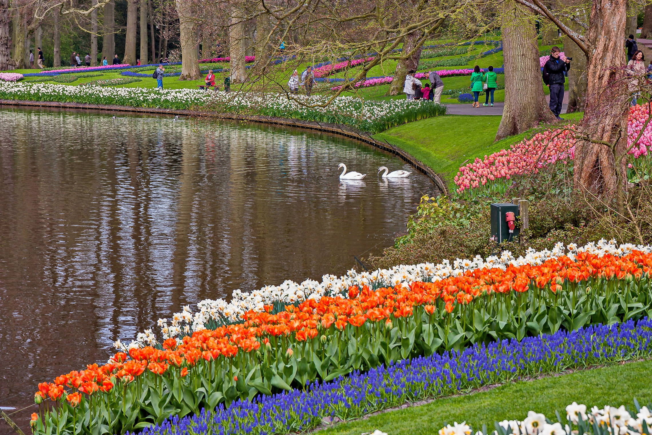 Tulips in Holland 04-205 (22)