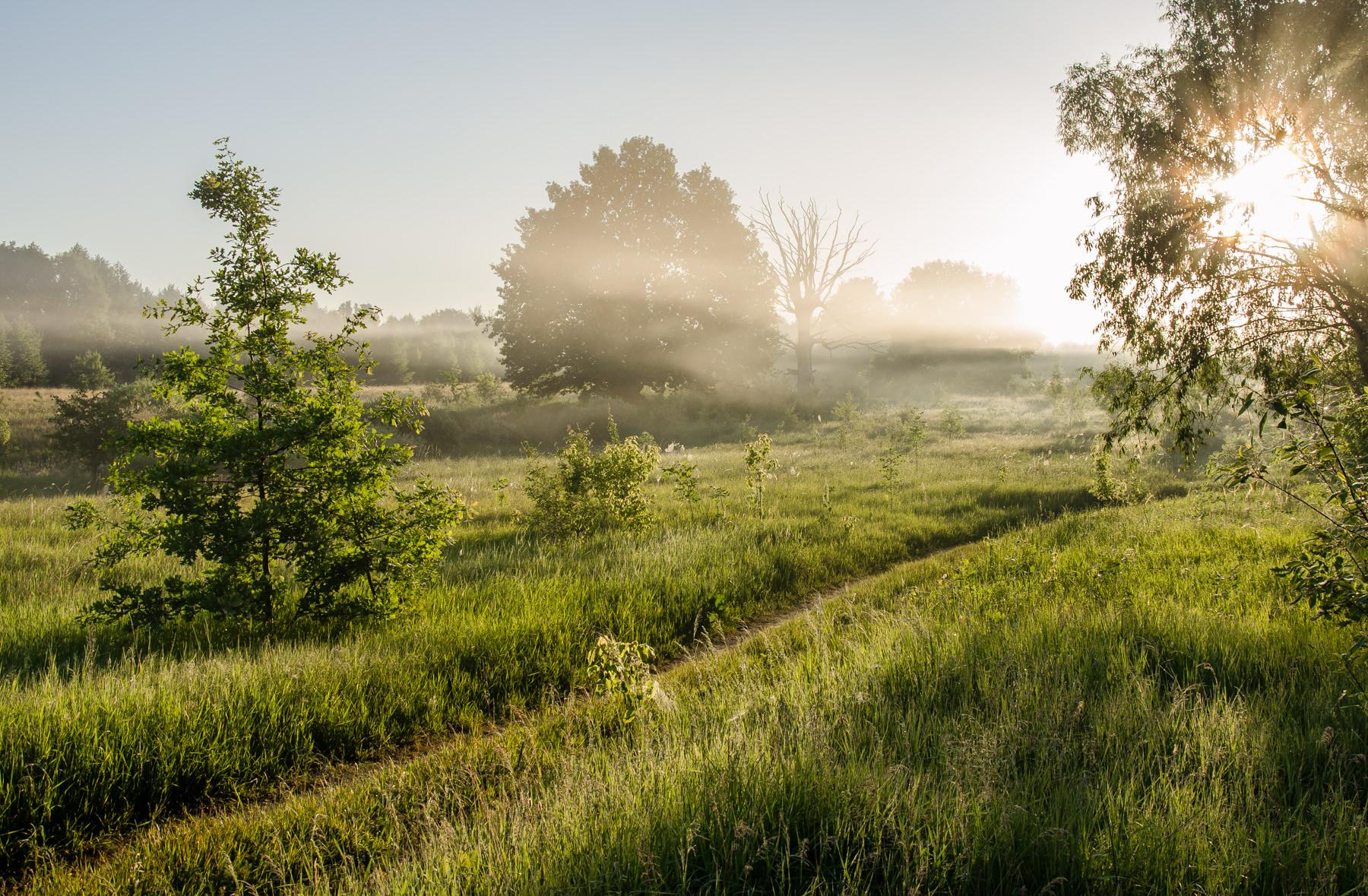 встретить, как туман летом фото юрия, куда мне
