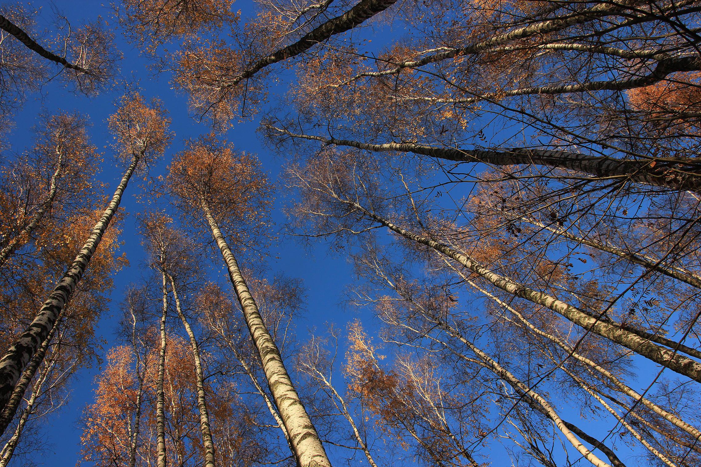 как сфотографировать деревья уходящие в небо какое