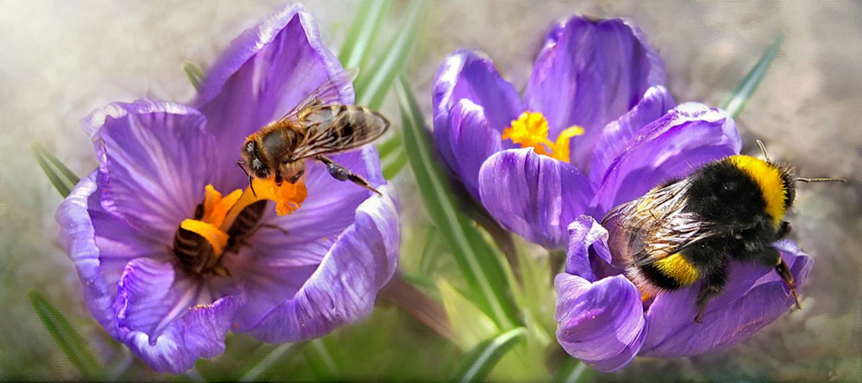 здание пчелы и шмели фото картинки эффекты освещения