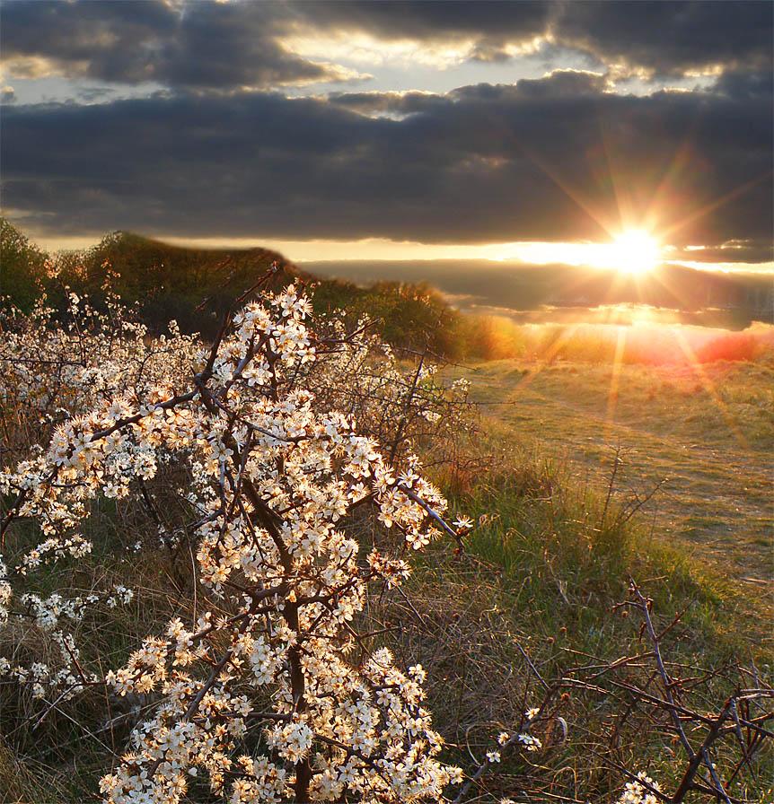 фото весны солнечной