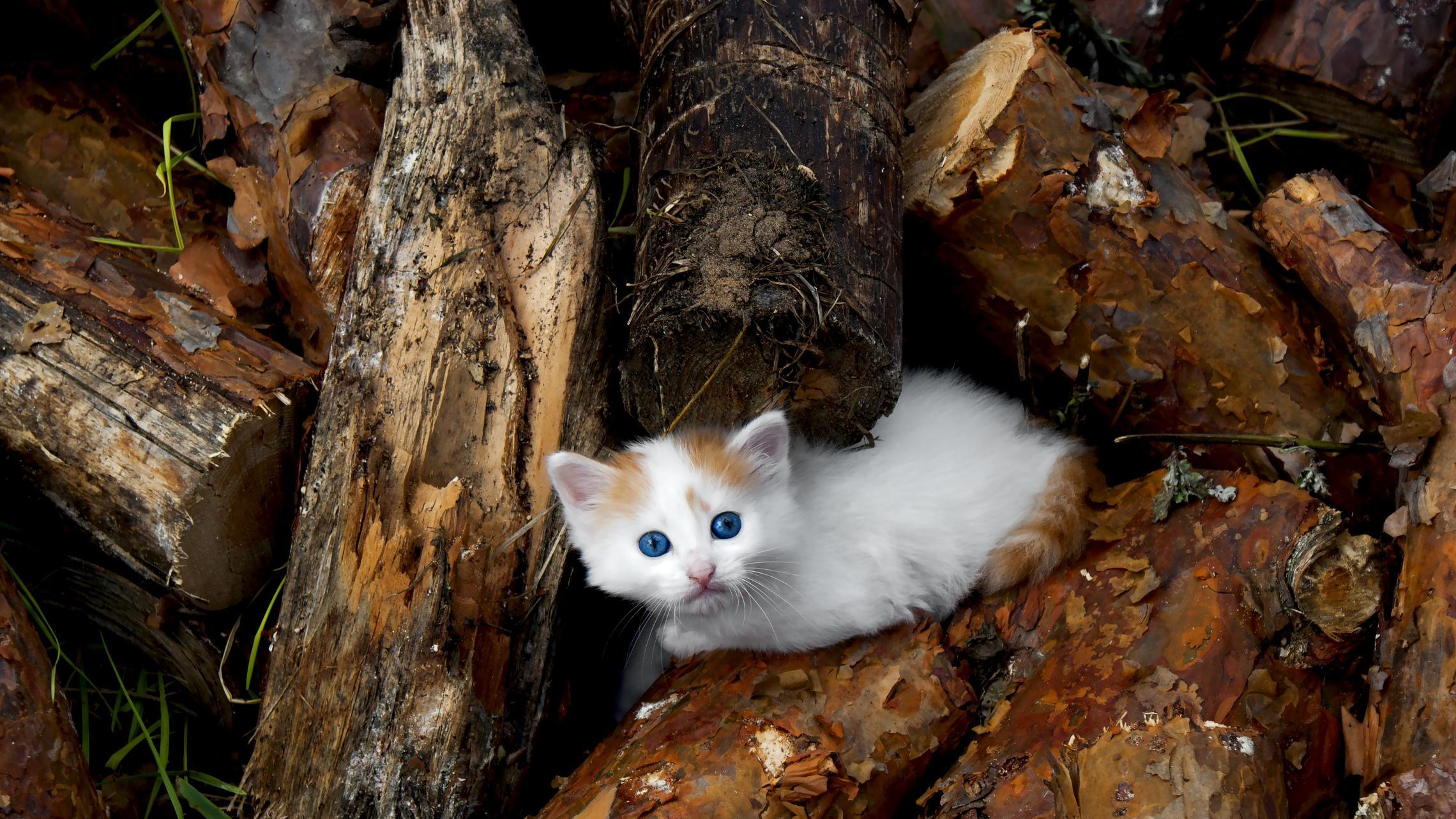 кошка на картинке с дровами наряды для