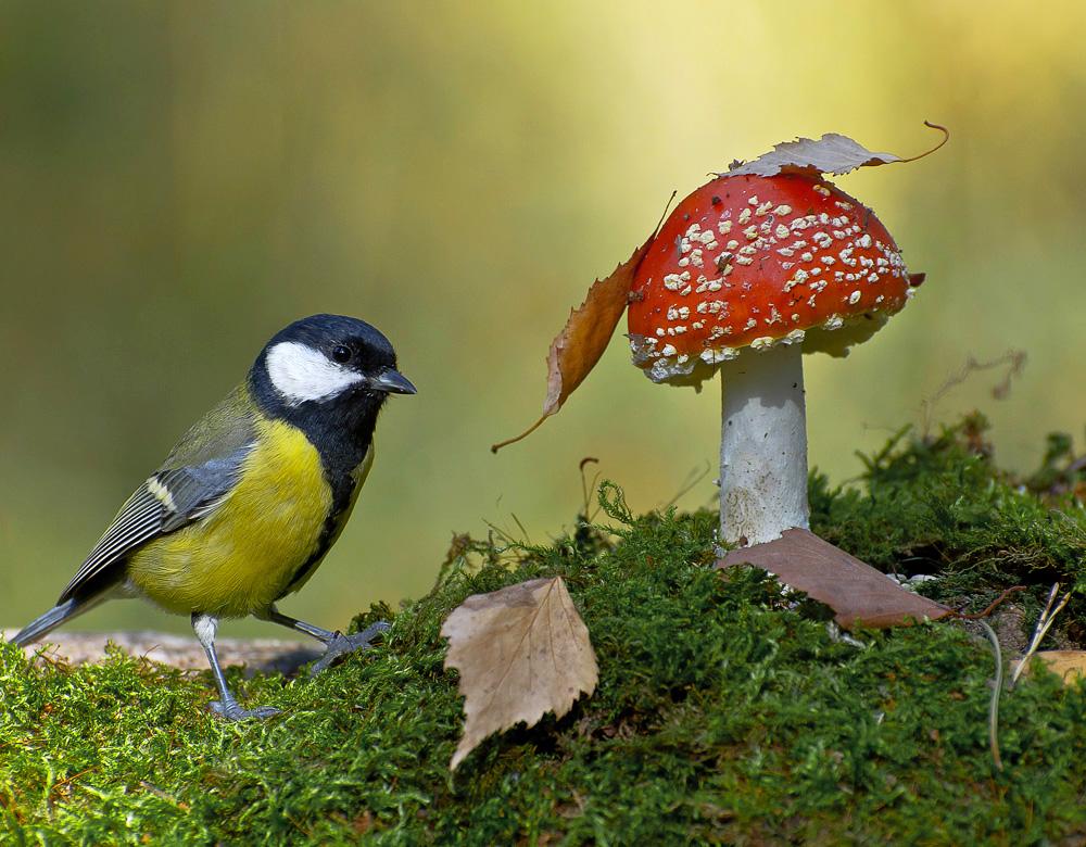 картинки с лесными птичками услугам гостей современные