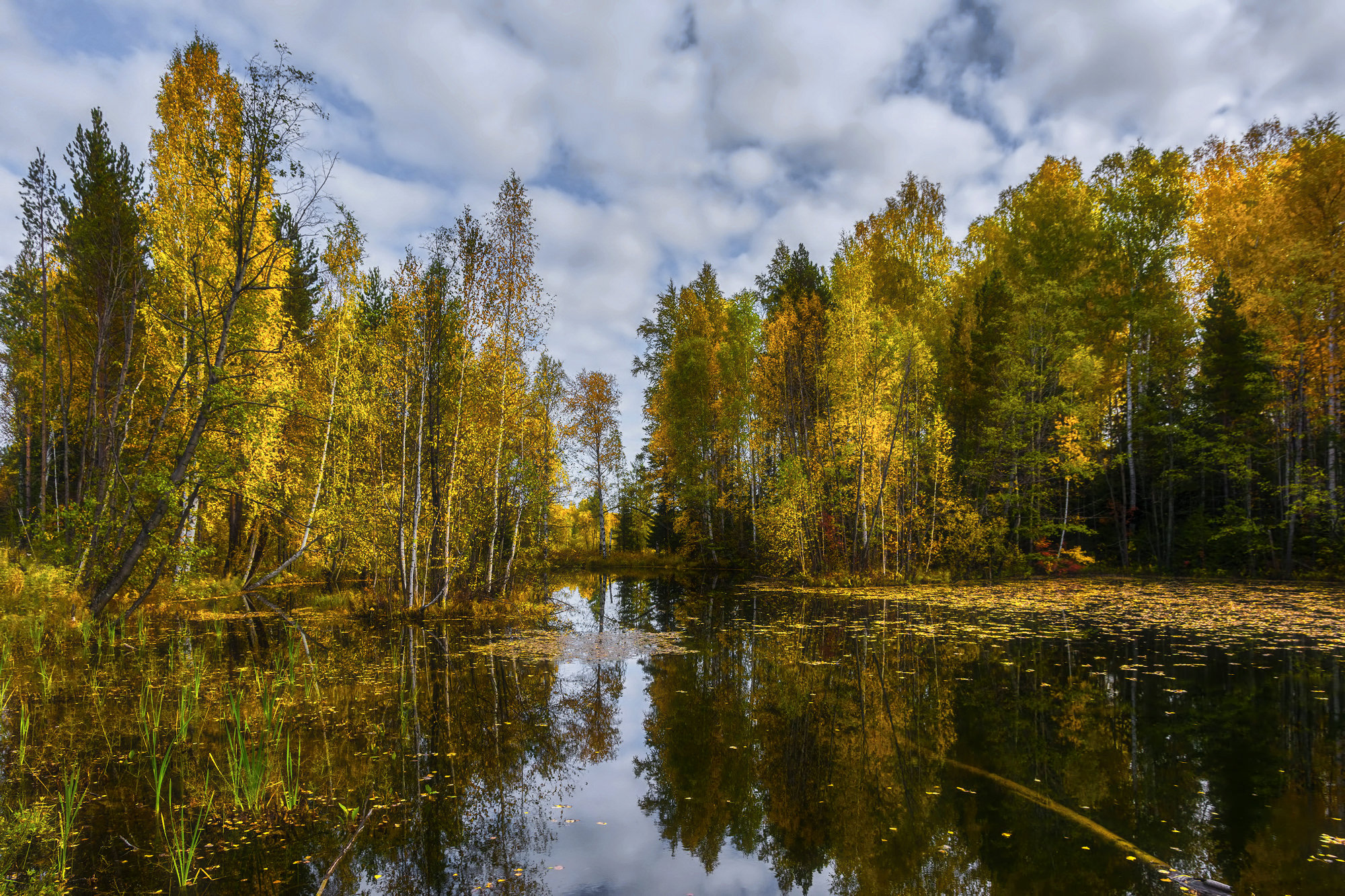 дизайнер воплощает картинки лесные озера могут спасти масс