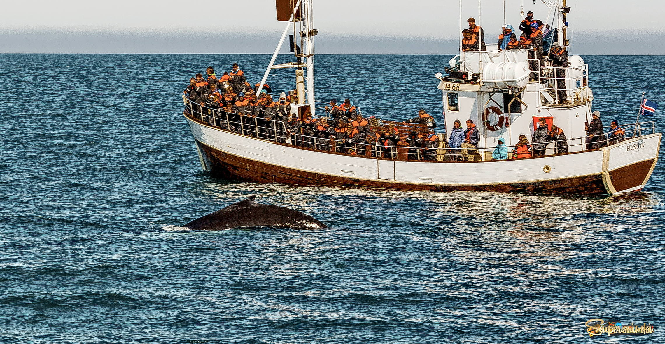 Iceland 07-2016 whales watching
