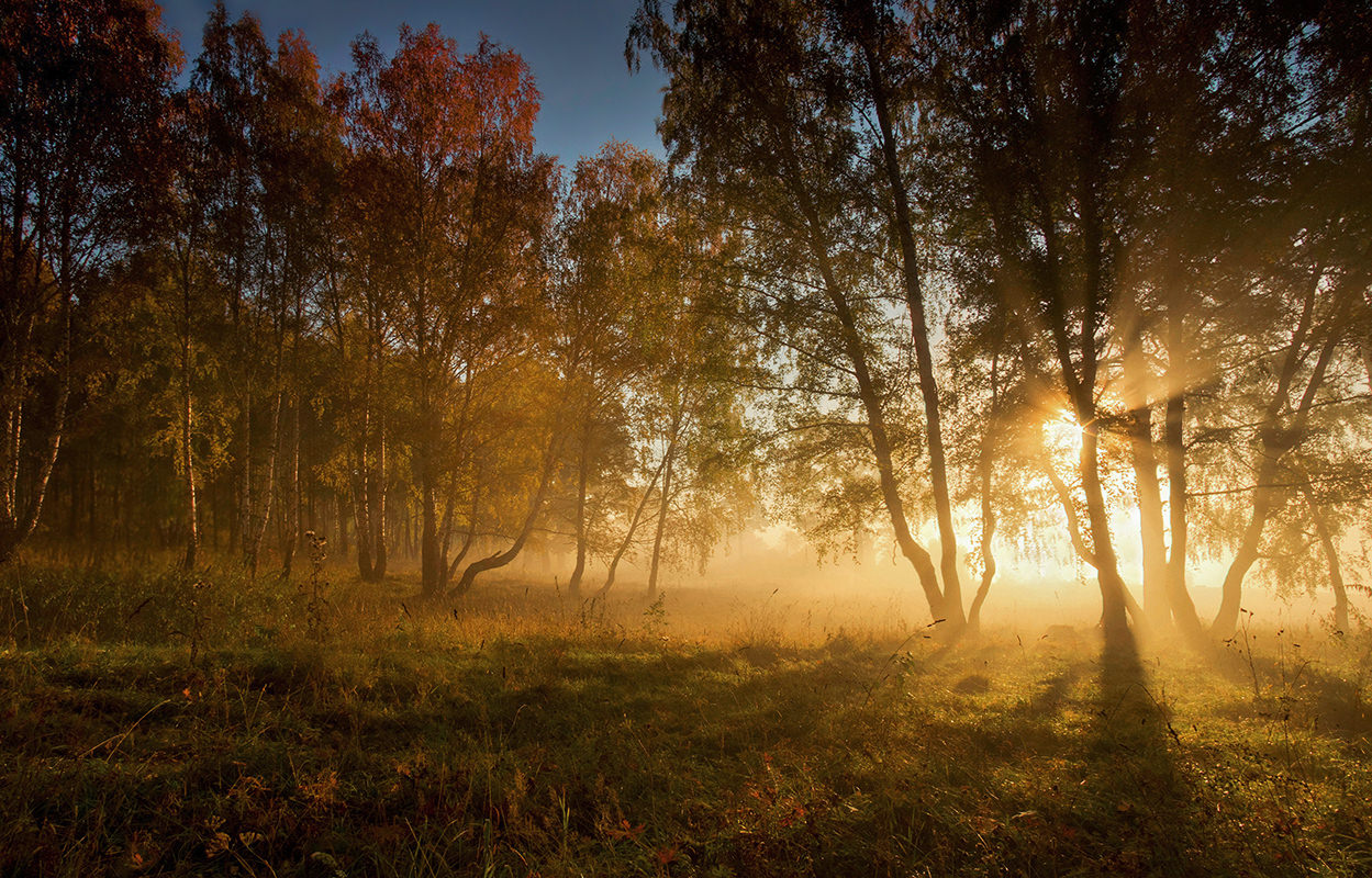 осеннее солнечное утро картинки сегодняшний