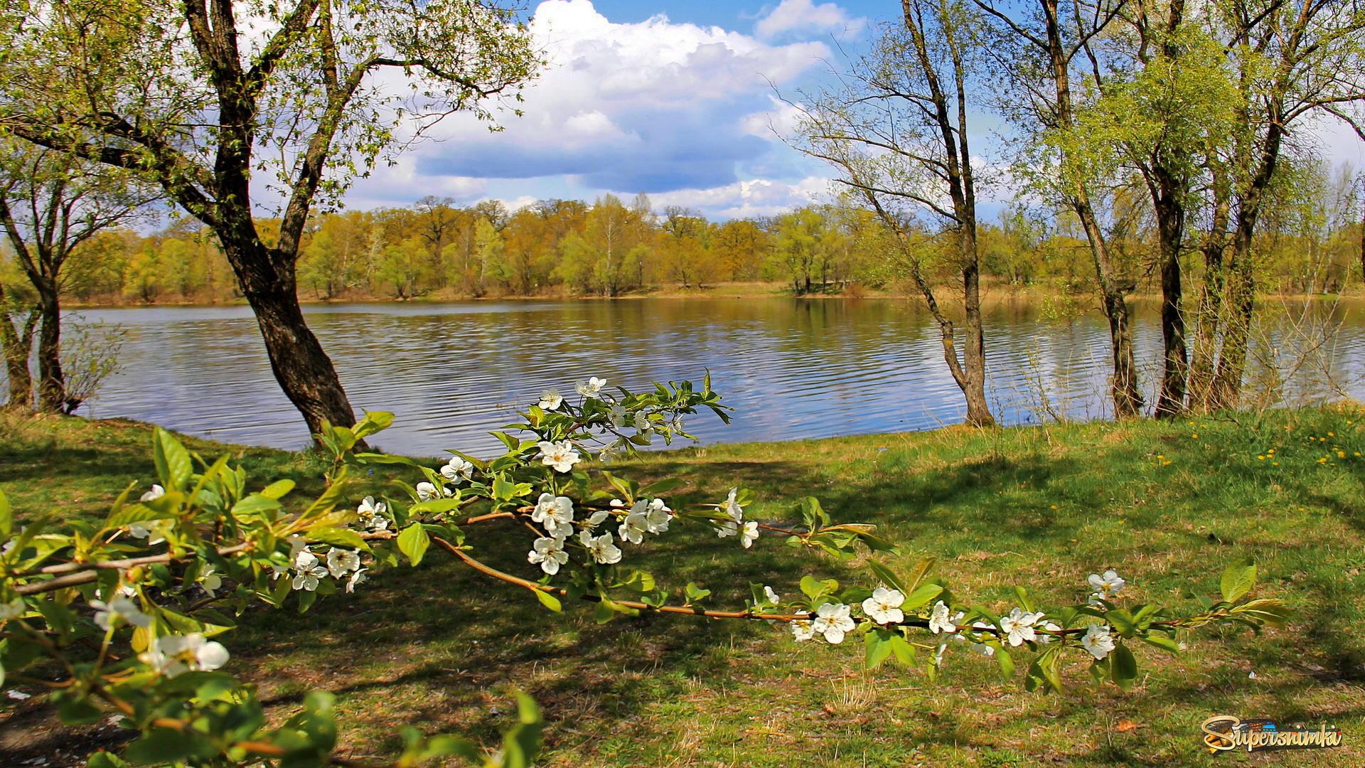 Весна на реке картинка