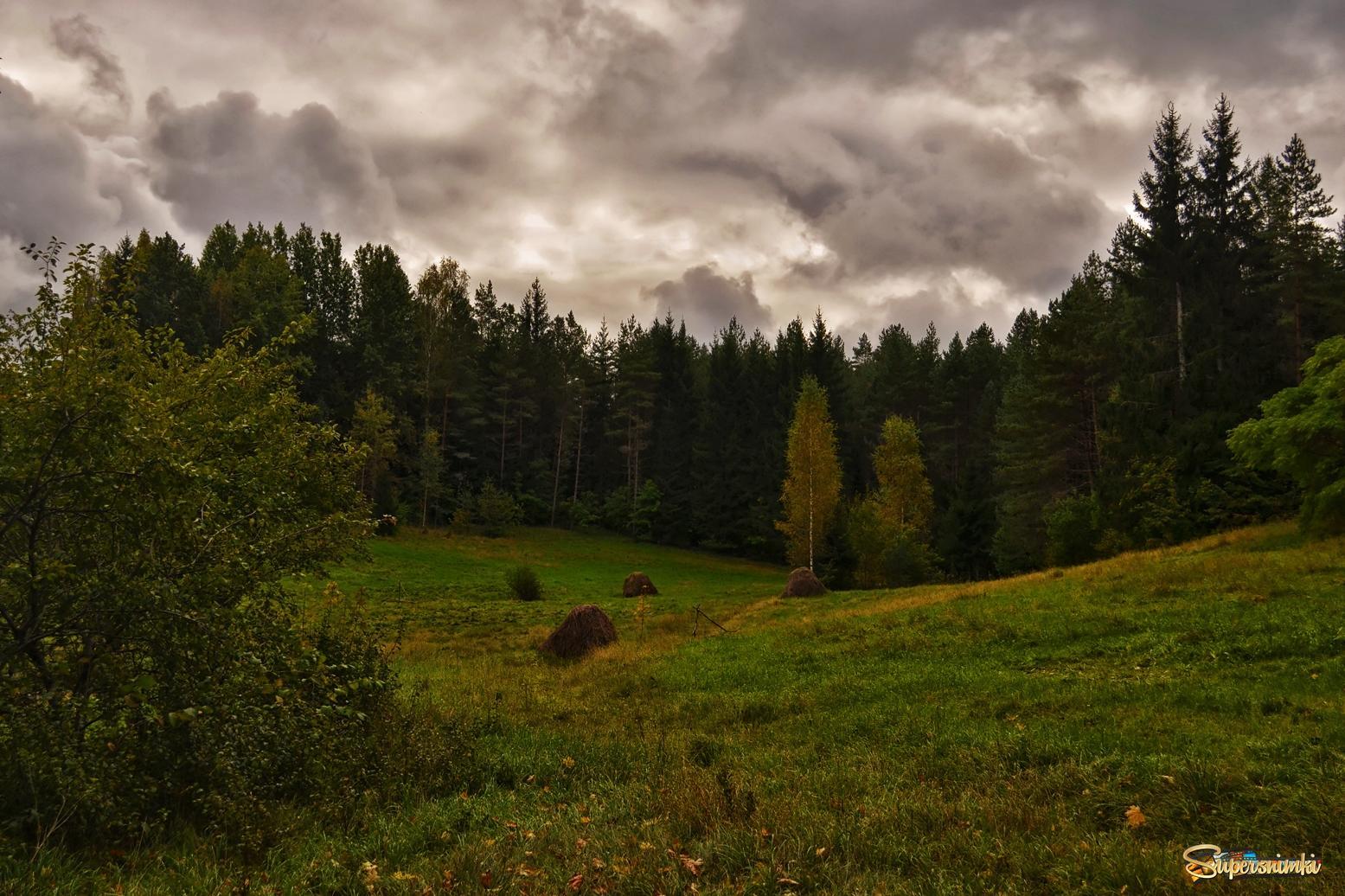 Картинки лесных опушек