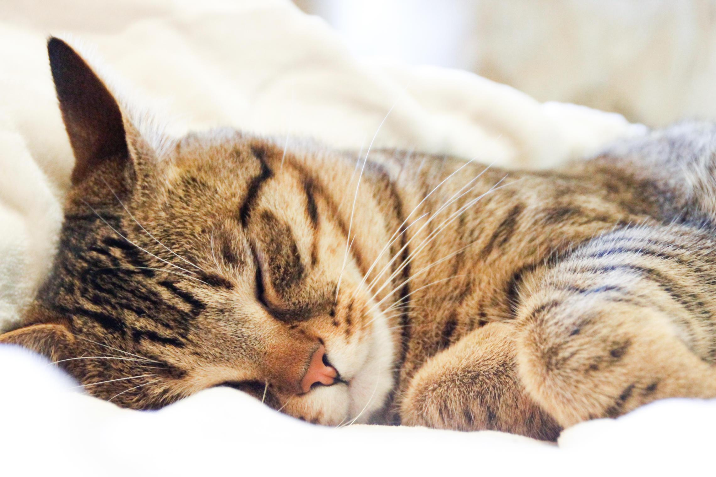 Спи кот картинка