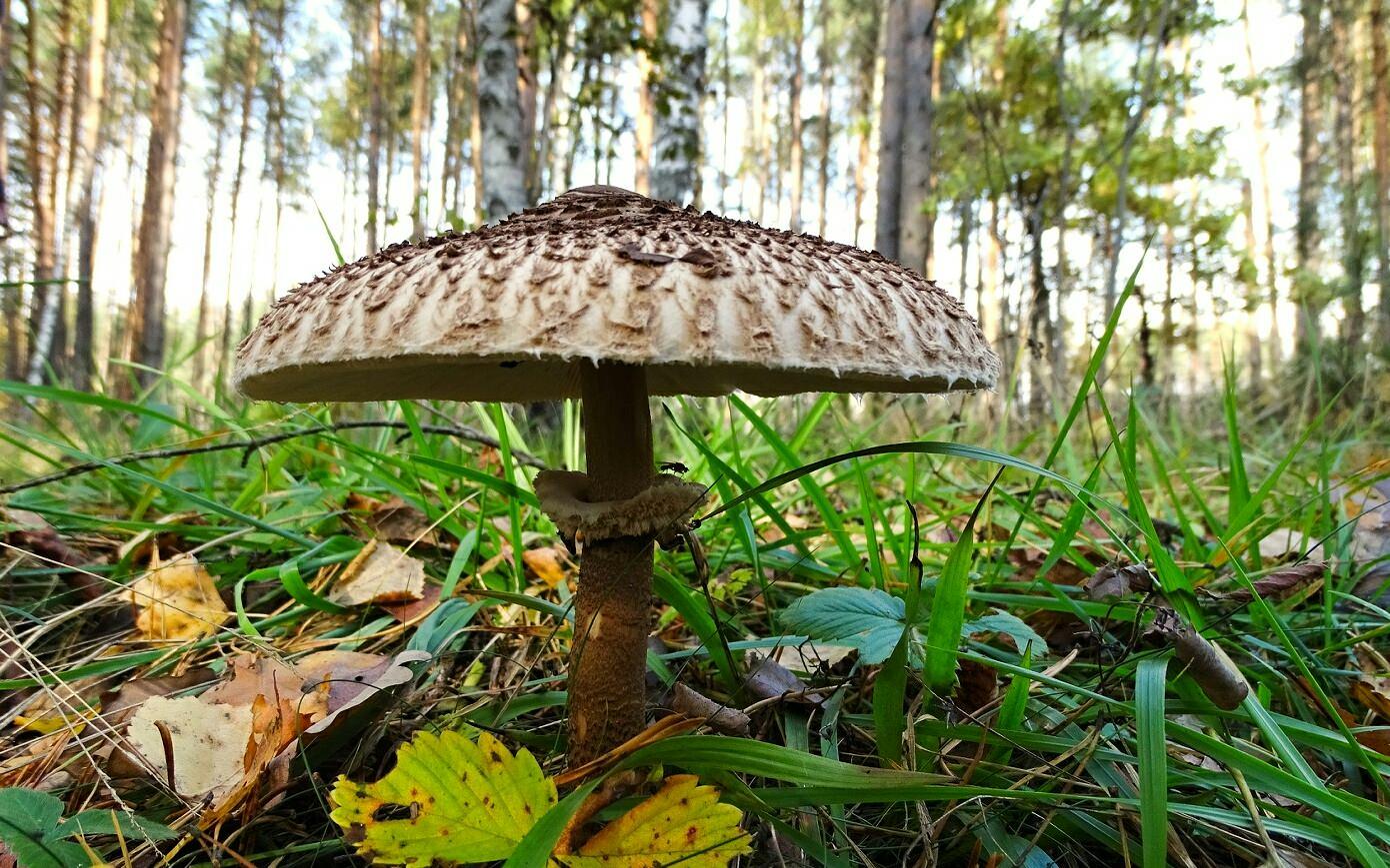 грибы съедобные белгородской в картинках это, прежде всего